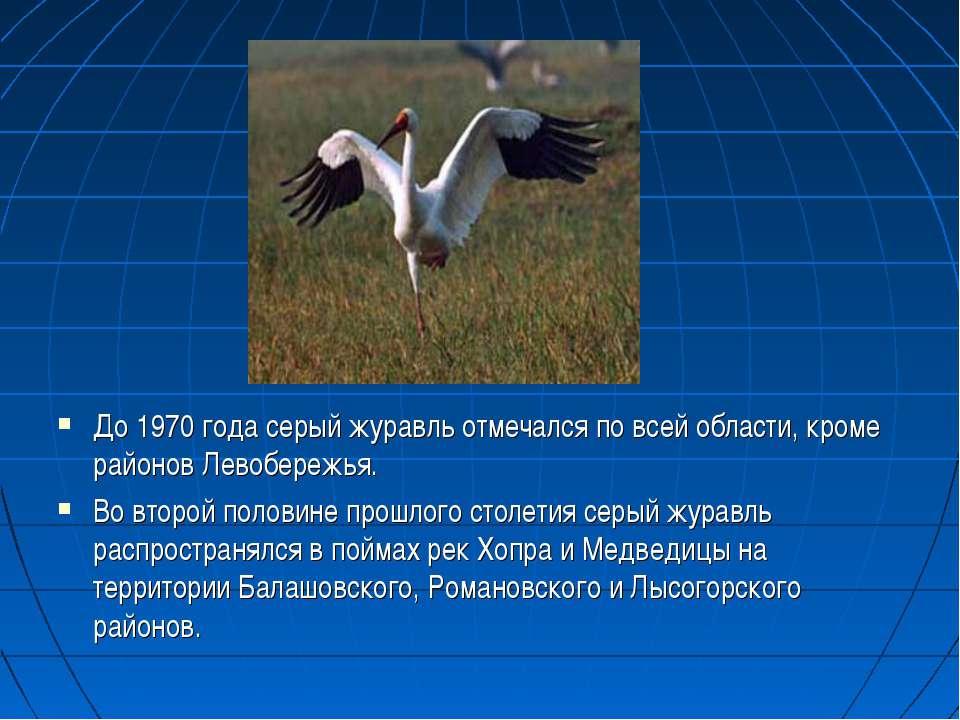 До 1970 года серый журавль отмечался по всей области, кроме районов Левобереж...