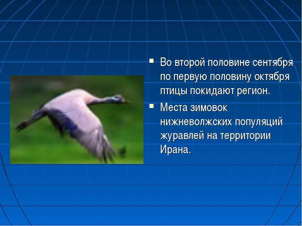 Во второй половине сентября по первую половину октября птицы покидают регион....