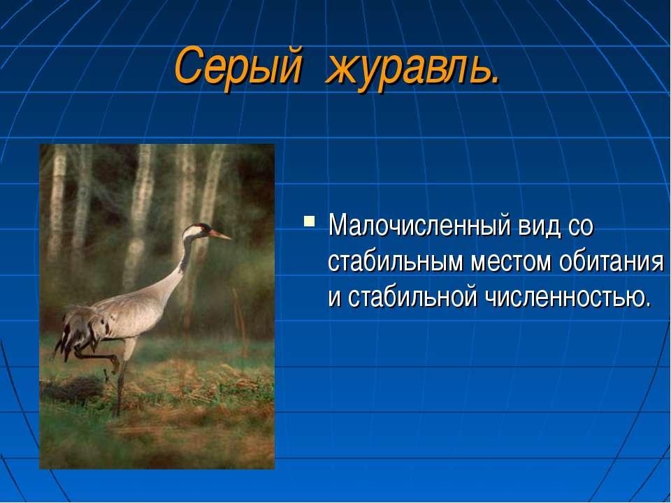 Серый журавль. Малочисленный вид со стабильным местом обитания и стабильной ч...