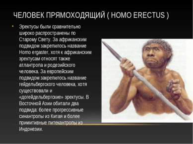 ЧЕЛОВЕК ПРЯМОХОДЯЩИЙ ( HOMO ERECTUS ) Эректусы были сравнительно широко распр...