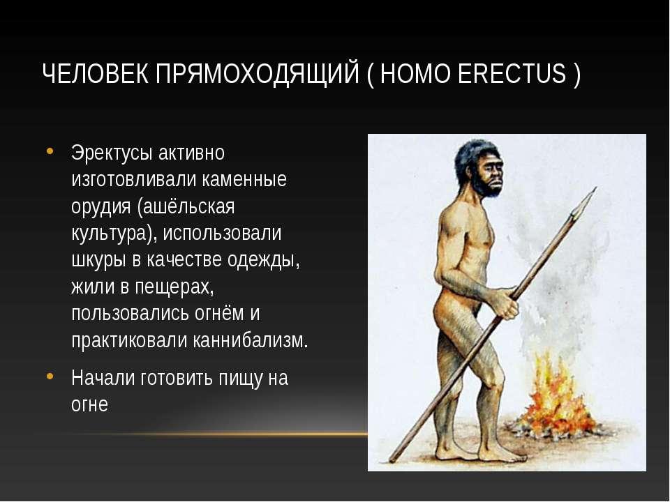 ЧЕЛОВЕК ПРЯМОХОДЯЩИЙ ( HOMO ERECTUS ) Эректусы активно изготовливали каменные...