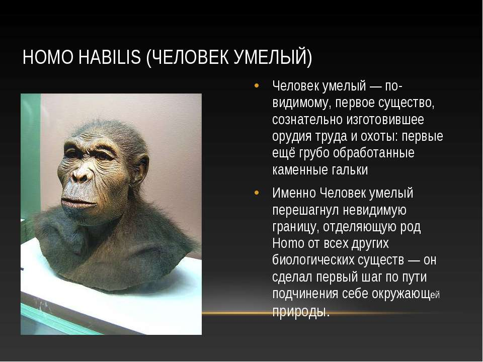 HOMO HABILIS (ЧЕЛОВЕК УМЕЛЫЙ) Человек умелый — по-видимому, первое существо, ...