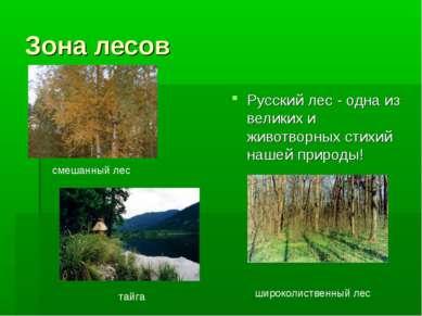 Зона лесов Русский лес - одна из великих и животворных стихий нашей природы! ...