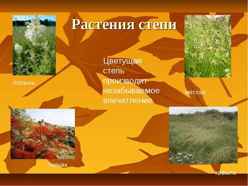 Растения степи ковыль мятлик типчак полынь Цветущая степь производит незабыва...