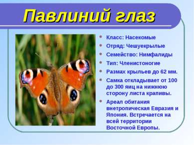 Павлиний глаз Класс: Насекомые Отряд: Чешуекрылые Семейство: Нимфалиды Тип: Ч...