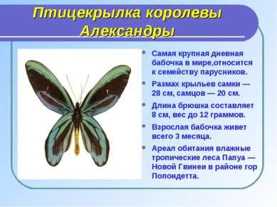 Птицекрылка королевы Александры Самая крупная дневная бабочка в мире,относитс...