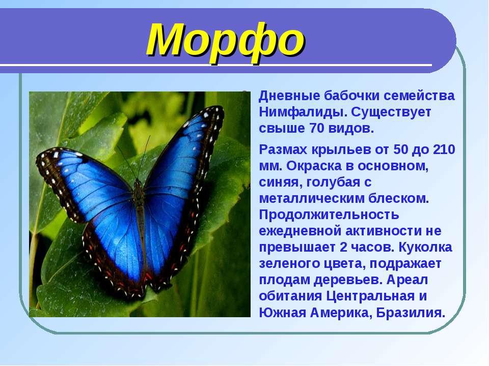 Морфо Дневные бабочки семейства Нимфалиды. Существует свыше 70 видов. Размах ...