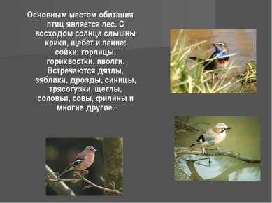 Основным местом обитания птиц является лес. С восходом солнца слышны крики, щ...