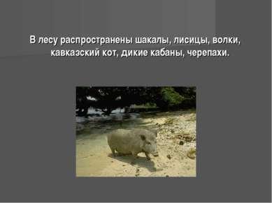 В лесу распространены шакалы, лисицы, волки, кавказский кот, дикие кабаны, че...