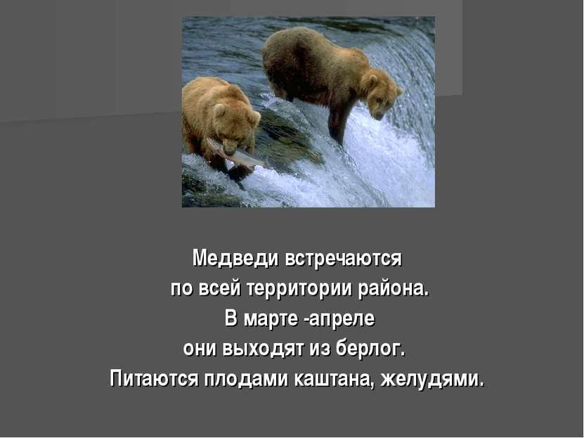 Медведи встречаются по всей территории района. В марте -апреле они выходят из...