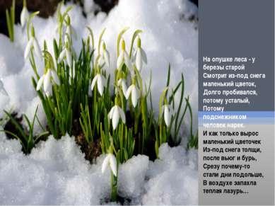 На опушке леса - у березы старой Смотрит из-под снега маленький цветок, Долго...