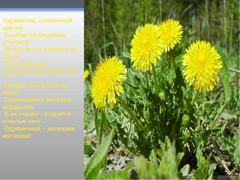 Одуванчик, солнечный цветок, Улыбается медовою улыбкой - Вновь весна ступила ...