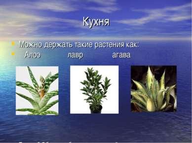 Кухня Можно держать такие растения как: Алоэ лавр агава Почему? Обладают бакт...
