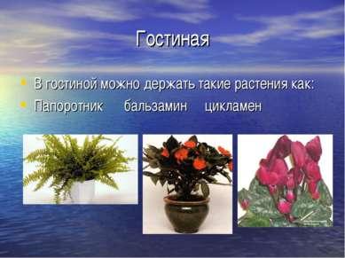 Гостиная В гостиной можно держать такие растения как: Папоротник бальзамин ци...