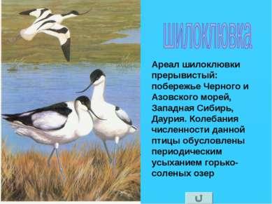 Ареал шилоклювки прерывистый: побережье Черного и Азовского морей, Западная С...
