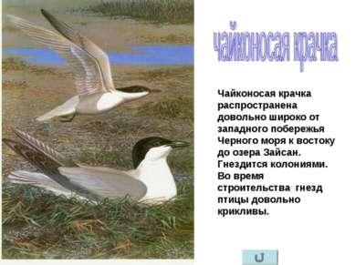 Чайконосая крачка распространена довольно широко от западного побережья Черно...