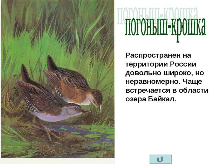 Распространен на территории России довольно широко, но неравномерно. Чаще вст...