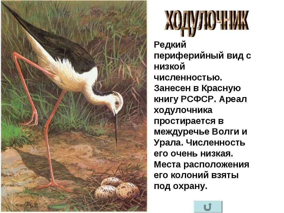 Редкий периферийный вид с низкой численностью. Занесен в Красную книгу РСФСР....