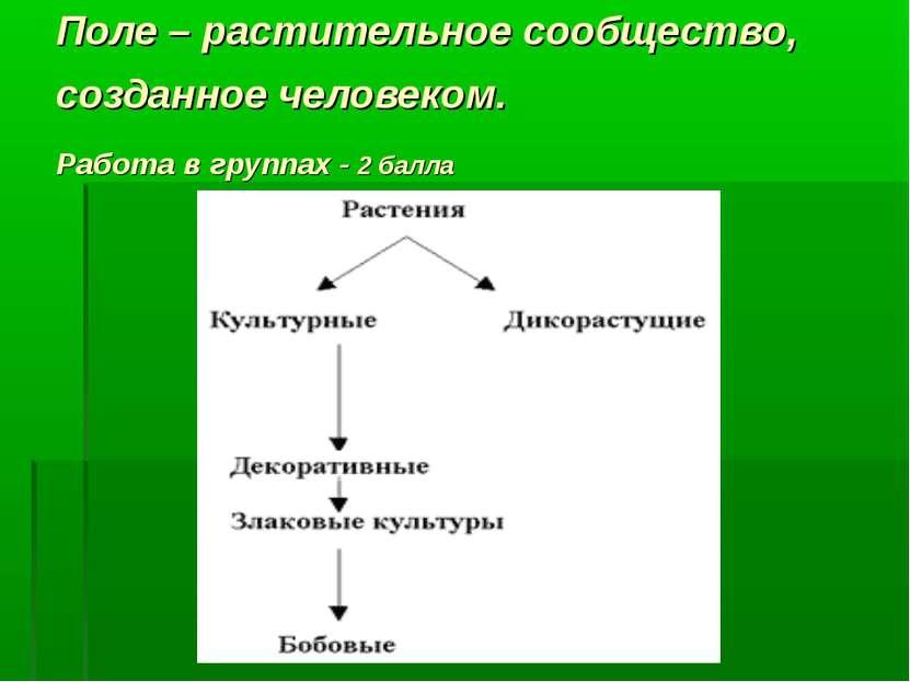Поле – растительное сообщество, созданное человеком. Работа в группах - 2 балла