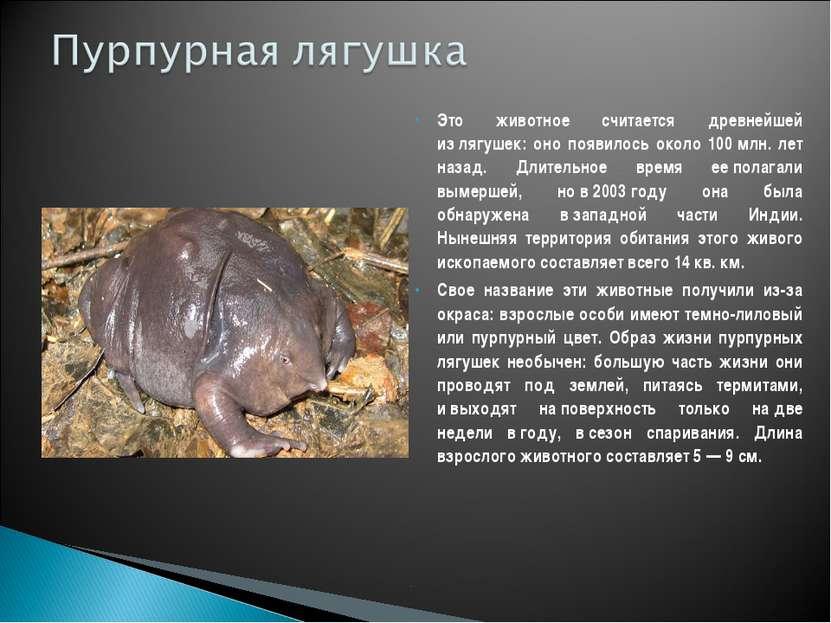 Это животное считается древнейшей излягушек: оно появилось около 100млн. ле...