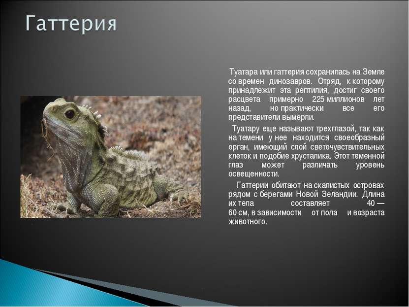 Туатара или гаттерия сохранилась наЗемле современ динозавров. Отряд, ккото...