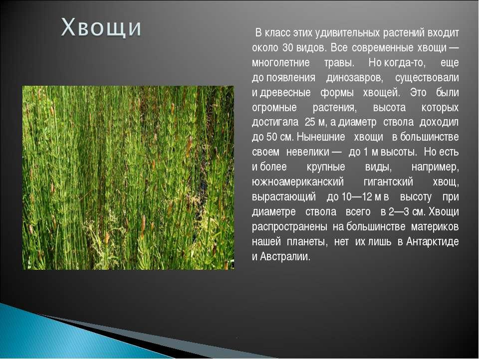 В класс этих удивительных растений входит около 30видов. Все современные хв...