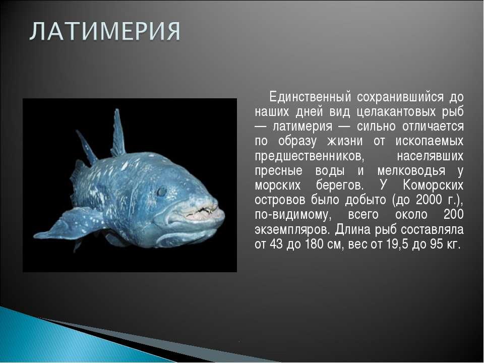 Единственный сохранившийся до наших дней вид целакантовых рыб — латимерия — с...