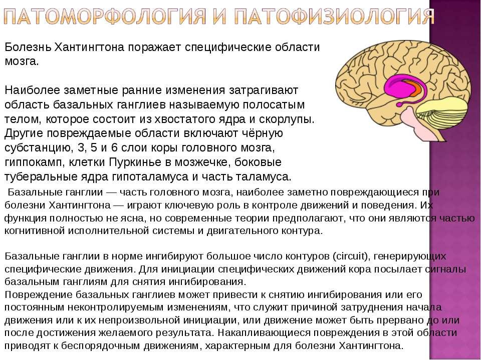 Базальные ганглии — часть головного мозга, наиболее заметно повреждающиеся пр...