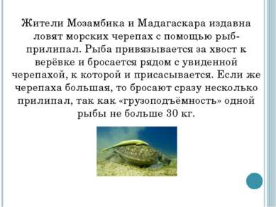 Жители Мозамбика и Мадагаскара издавна ловят морских черепах с помощью рыб-пр...