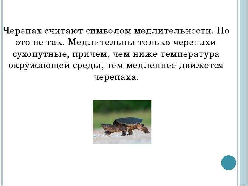 Черепах считают символом медлительности. Но это не так. Медлительны только че...