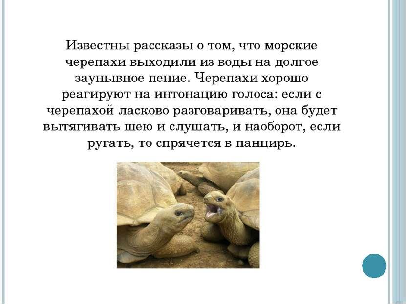Известны рассказы о том, что морские черепахи выходили из воды на долгое заун...