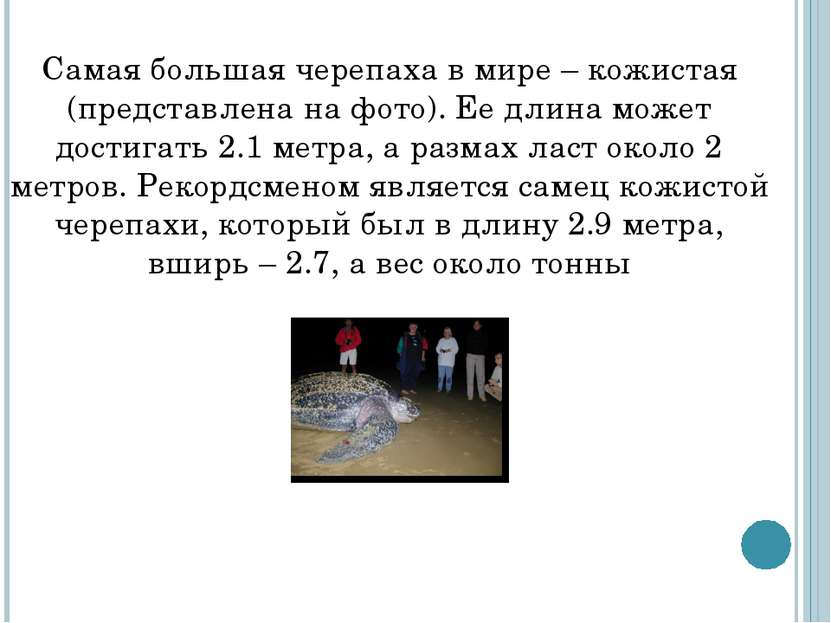 Самая большая черепаха в мире – кожистая (представлена на фото). Ее длина мож...