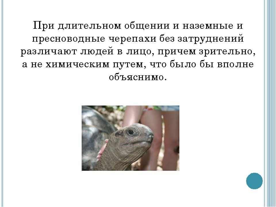 При длительном общении и наземные и пресноводные черепахи без затруднений раз...