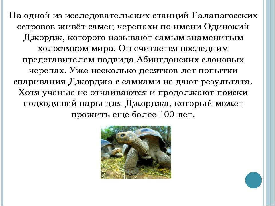 На одной из исследовательских станций Галапагосских островов живёт самец чере...