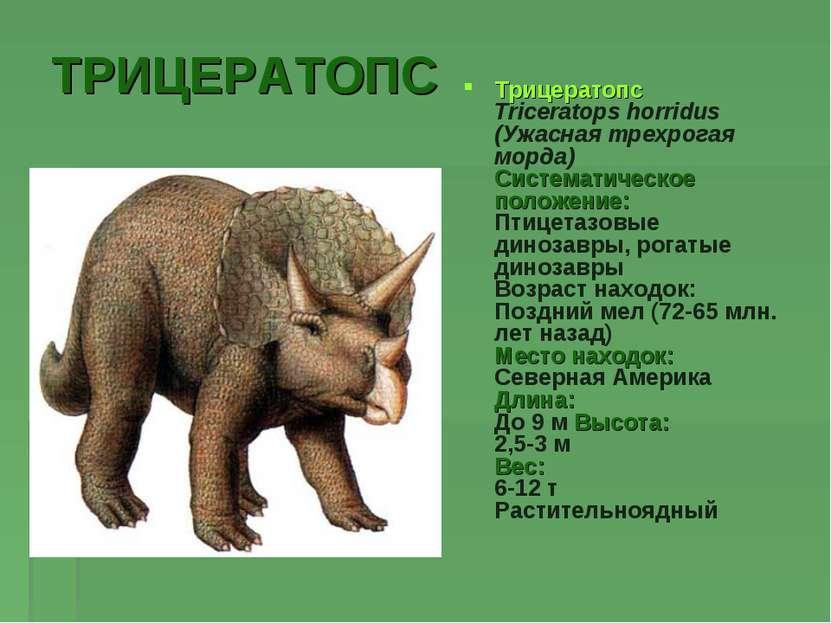 ТРИЦЕРАТОПС Трицератопс Triceratops horridus (Ужасная трехрогая морда) Систем...