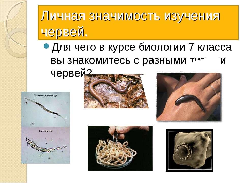 Личная значимость изучения червей. Для чего в курсе биологии 7 класса вы знак...