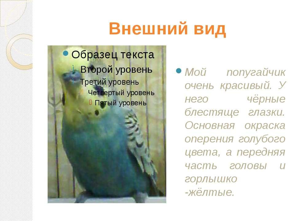 Внешний вид Мой попугайчик очень красивый. У него чёрные блестяще глазки. Осн...