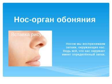Нос-орган обоняния Носом мы воспринимаем запахи, окружающие нас. Ведь всё, чт...