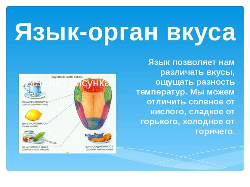 Язык-орган вкуса Язык позволяет нам различать вкусы, ощущать разность темпера...