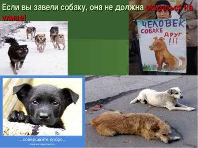 Если вы завели собаку, она не должна оказаться на улице!