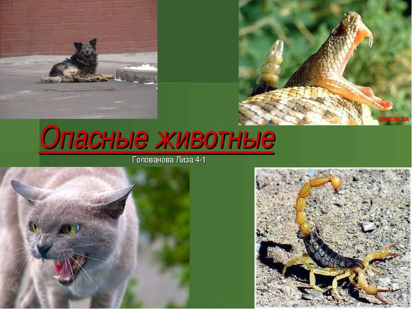 Опасные животные Голованова Лиза 4-1