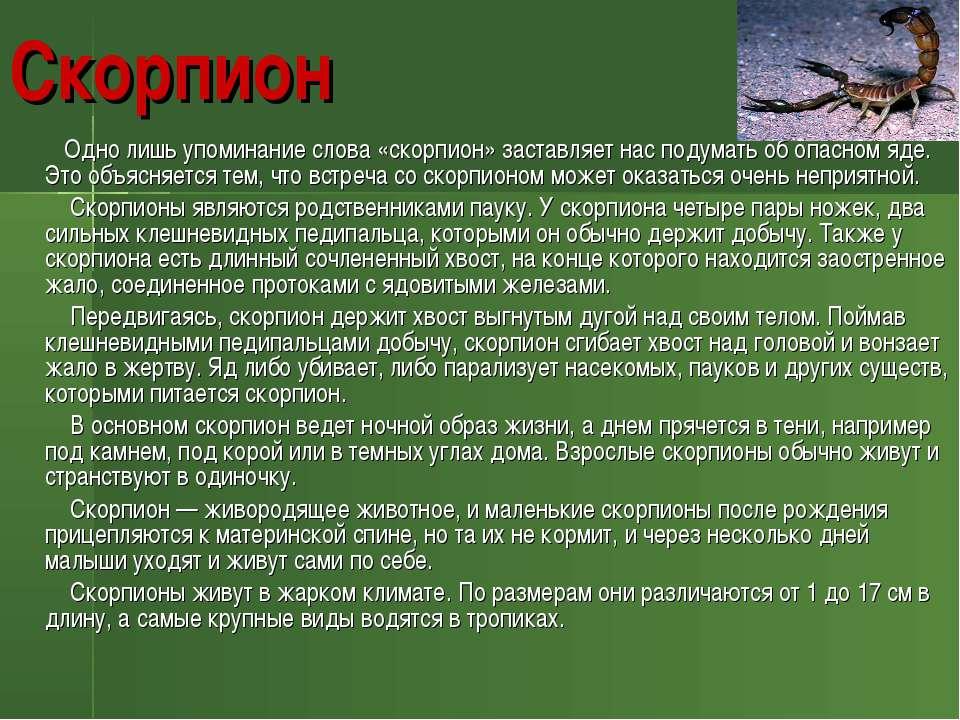 Скорпион Одно лишь упоминание слова «скорпион» заставляет нас подумать об опа...