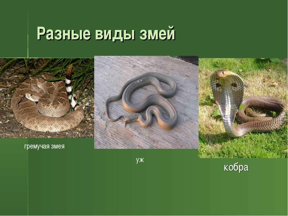 Разные виды змей кобра кобра гремучая змея уж