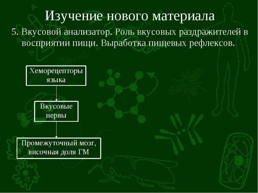 Изучение нового материала 5. Вкусовой анализатор. Роль вкусовых раздражителей...