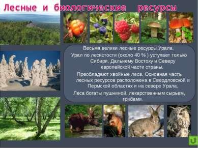 Весьма велики лесные ресурсы Урала. Урал по лесистости (около 40 % ) уступает...