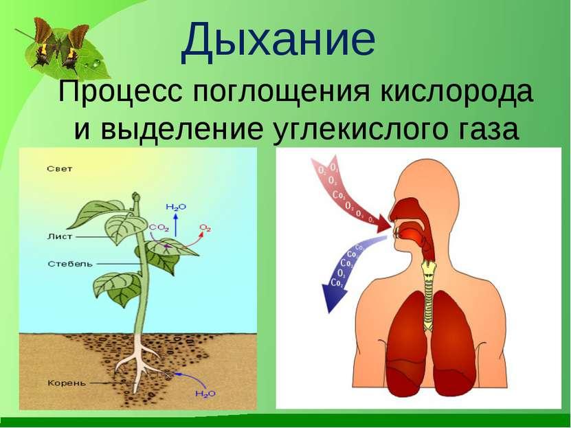 профессиональное химия обьяснять процесс дыхания лечение