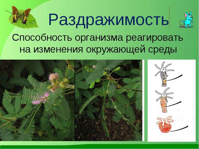 Раздражимость Способность организма реагировать на изменения окружающей среды