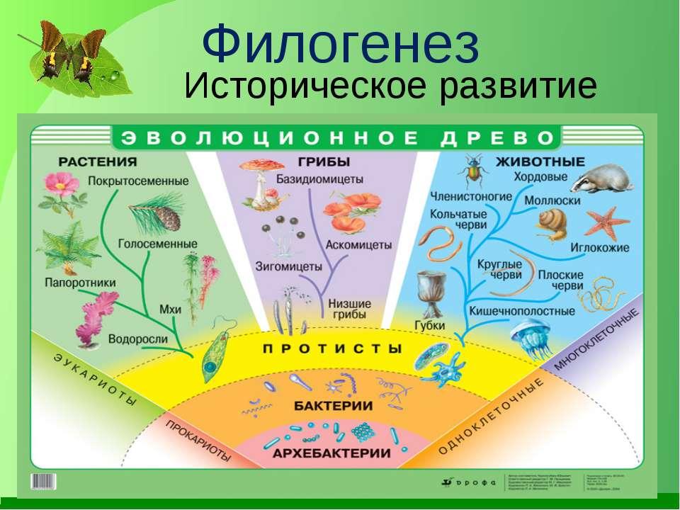 Филогенез Историческое развитие