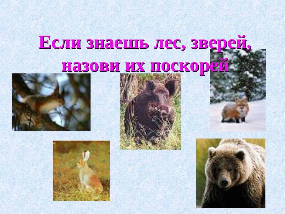 Если знаешь лес, зверей, назови их поскорей