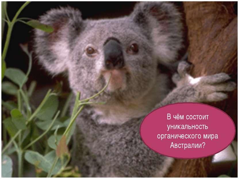 В чём состоит уникальность органического мира Австралии?